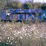Ульи с пчёлами погрузили для перевозки на медосбор