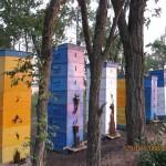 Только сильная семья способна собрать много мёда